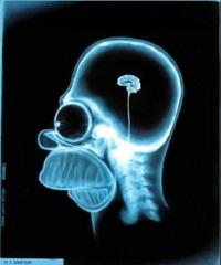Homers_brain